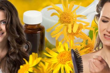 Rostlinka Arnika, známá i jako Prha, dokáže nastartovat růst našich vlasů a zastavit jejich padání. Umí totiž prokrvit vlasovou pokožku.