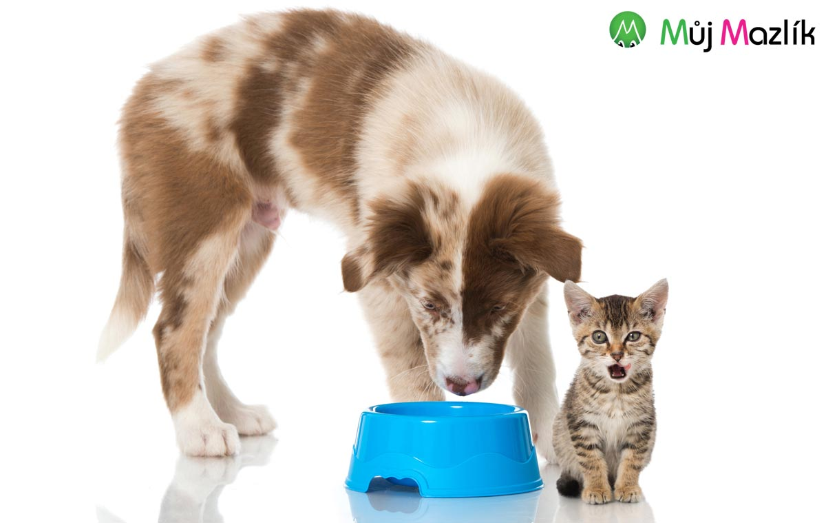 Naučte se, jak svému psovi nebo kočce vybrat nejlepší granule.
