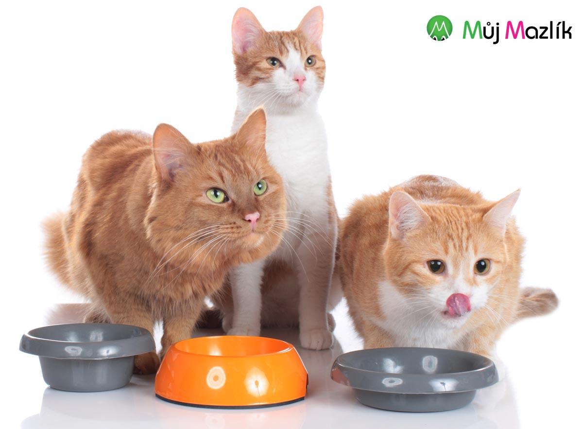 Najděte své kočce správnou značku granulí.