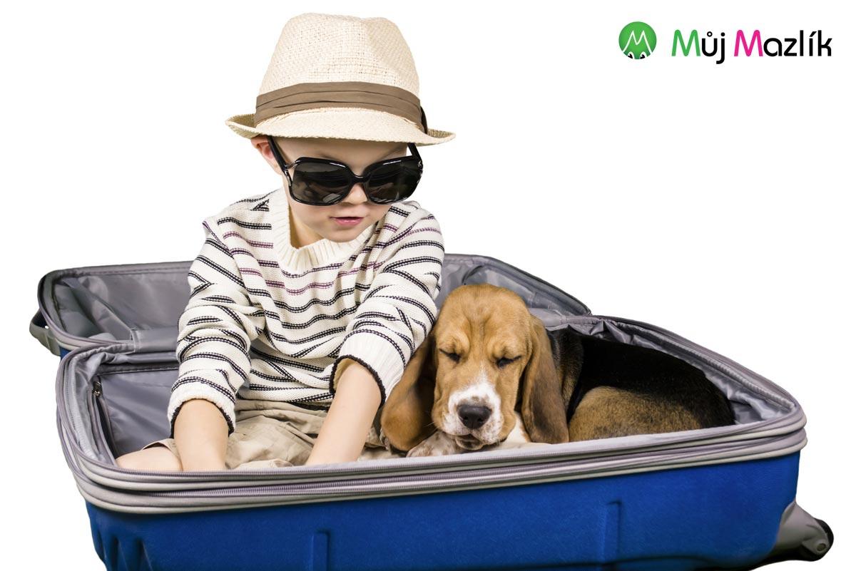 Do kufru štěňátko nezabalíte. Přemýšlejte, jak s ním budete cestovat.