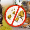 Jaká antiparazitika pro psy fungují nejlépe a nejrychleji nás zbaví blech nebo zamezí přisátí klíštěte? Obojky jsou účinným, ale ne jediným řešením.