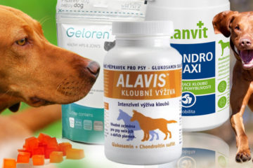 Pomozte svému psovi ke zdraví. Kvalitní strava a speciální kloubní výživa pro psa jsou základem pro zdravý pohybový aparát.