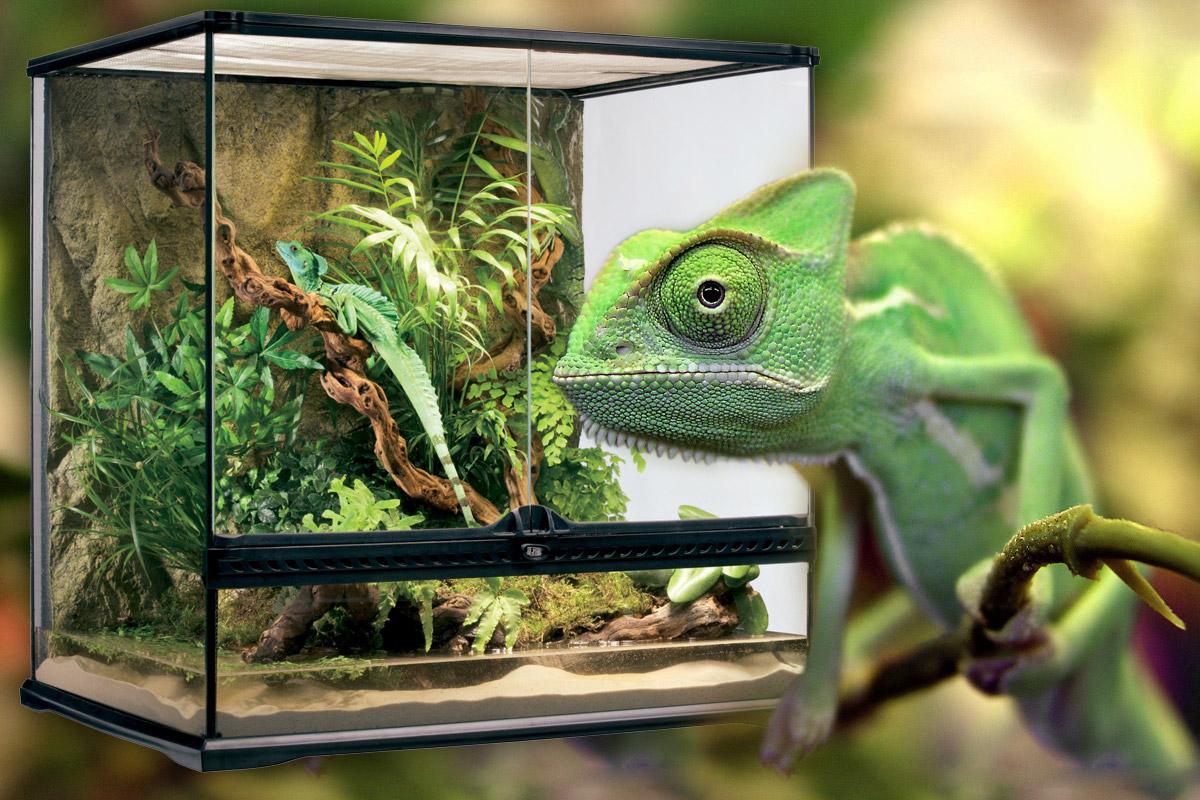 03-vivarium-chameleon