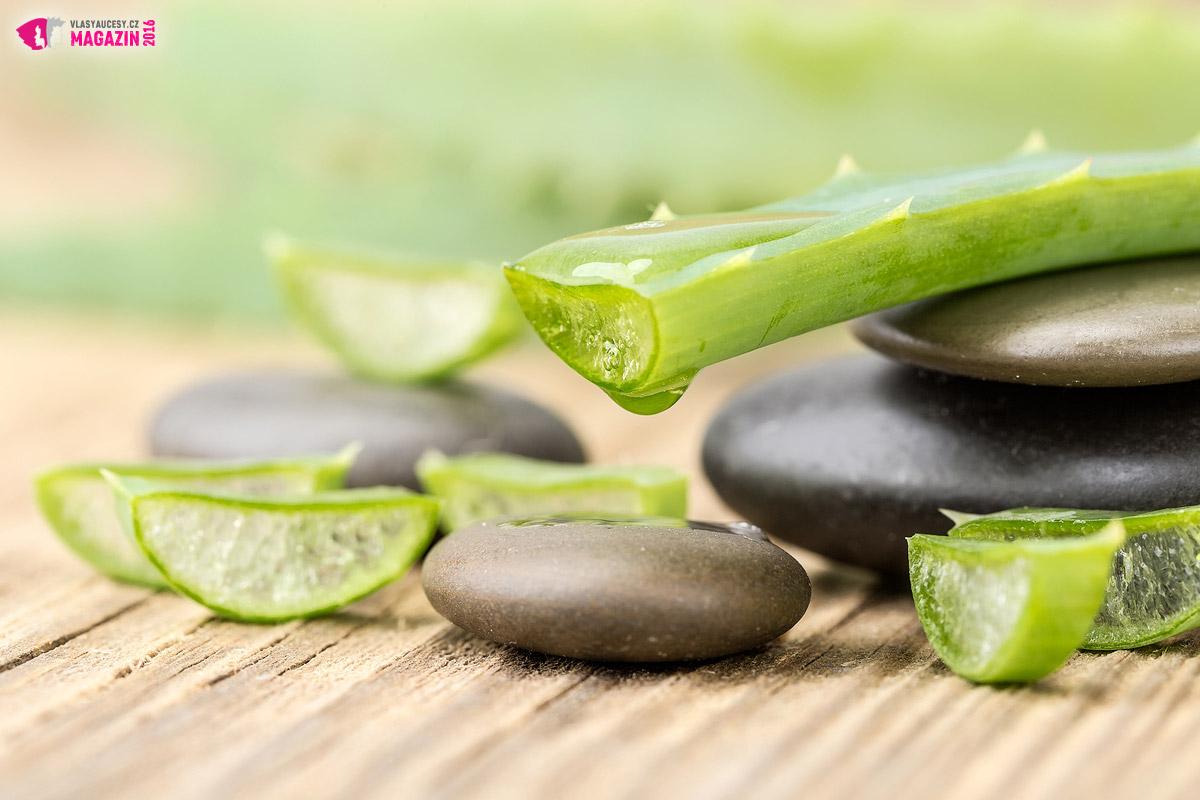 Aloe obsahuje řadu vlasům prospěšných látek. Ty se dají užít vnitřně i zevně